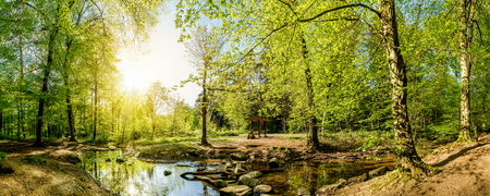 Forest panorama with creek and sun 스톡 콘텐츠