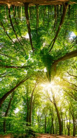 Treetops im Wald bei strahlendem Sonnenschein