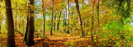 Im Herbst Gesamtstruktur