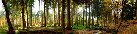 Autumn forest panorama Standard-Bild