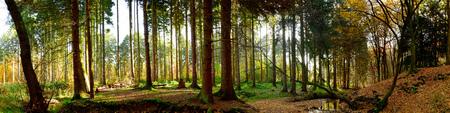 Herfst bos panorama