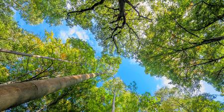 Treetops im Wald