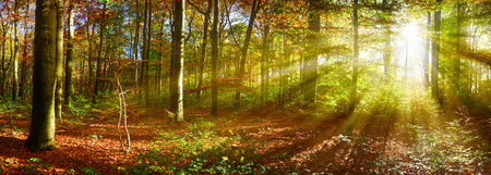 green landscape: Autumn forest with sun rays
