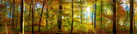 Herfst bos met zonnestralen