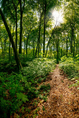 frhling: Path through the forest