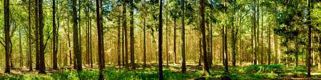 Panorama del bosque Foto de archivo - 64328408