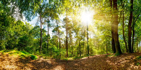 Beautiful scene in the forest with sunshine