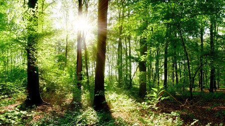 Glade in the forest with sun