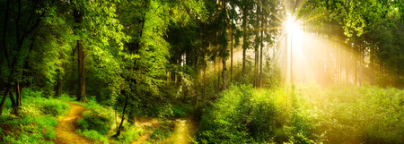 Forest path beside a stream, idyllic sunrise in forest