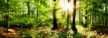 Beautiful sunrise in the forest