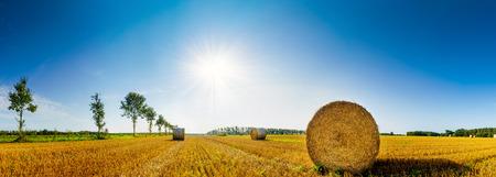harvest field: Straw bales on a field