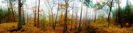 Forest panorama in autumn with fog Stock Photo