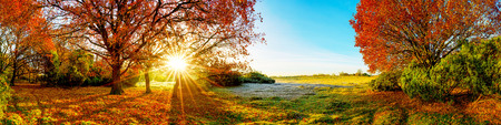 Idyllic landscape in autumn with forest, meadow and sun Stock Photo