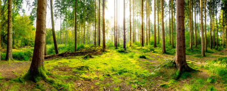 Beautiful forest Reklamní fotografie - 71413882