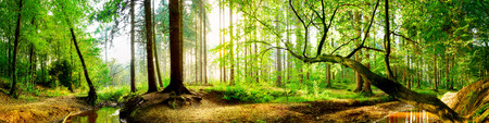 Idyllisch bos bij zonsopgang Stockfoto