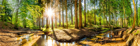 Forest panorama with sun and brook 스톡 콘텐츠
