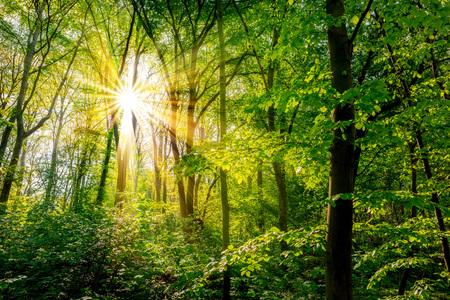 Wald im Frühling mit grünen Bäumen und strahlender Sonne