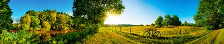夏の川、木々、明るい日光の下で牧草地の風景します。
