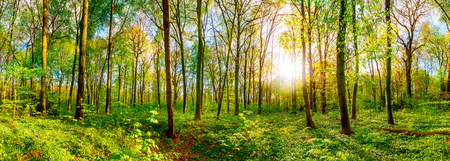Wonderful forest panorama in spring with bright sun Stock Photo