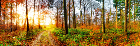 Road through a beautiful autumn forest at sunrise