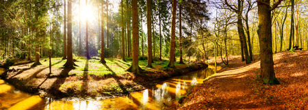 Beautiful autumn forest with stream and bright sun shining through the trees Banco de Imagens