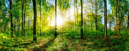 Frühling im Wald mit heller Sonne scheint durch die Bäume Standard-Bild - 93275359