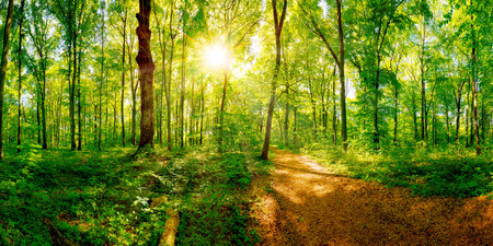 Path through a spring forest in bright sunshine Stock Photo