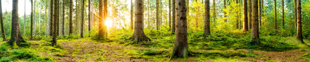 Panorama of a beautiful forest at sunrise Stock Photo
