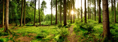 Sunrise in a beautiful forest in Germany Stock Photo