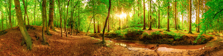 Panorama of an idyllic forest with brook at sunrise Stock Photo