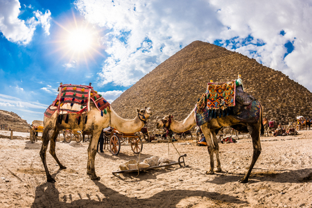 Two camels in front of the great pyramid of Giza, Egypt Stock Photo