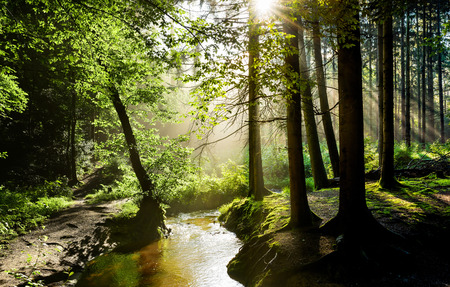 Beautiful sunrise in a misty forest with sunbeams shining through the trees Stockfoto