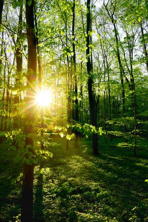 Bosque en primavera al amanecer Foto de archivo - 99797762
