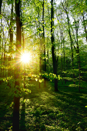Forest in spring at sunrise