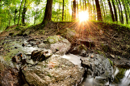 Beautiful forest with brook and bright sun shining through the trees Stock Photo