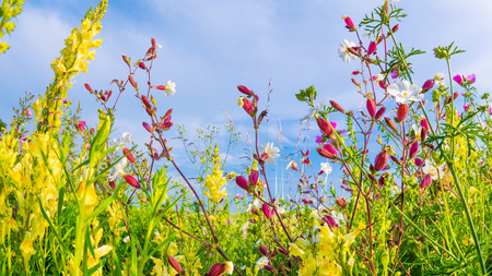 Beautiful flower meadow in summer time