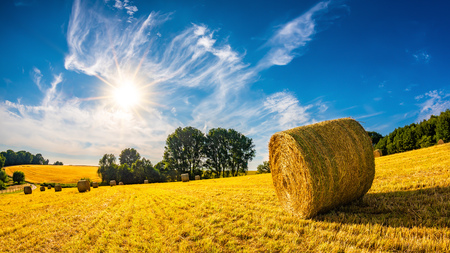 Landscape in summer with hay bales on a field and blue sky with bright sun in the background