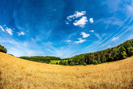 Sommerlandschaft mit Feldern, Wiesen und Wald Standard-Bild