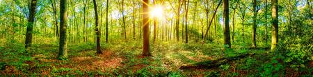 Prachtig bospanorama in het voorjaar met felle zon die door de bomen schijnt Stockfoto