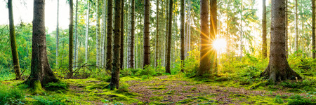 Beautiful forest in spring sun shining through the trees Stockfoto