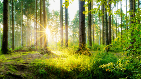 Beautiful forest in spring sun shining through the trees
