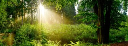 Beautiful forest with bright sun shining through the trees