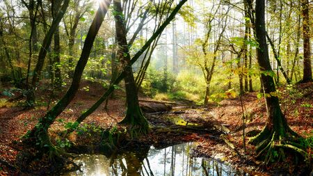 Bright forest with big trees on the forest floor and sunlight in the background Stock Photo - 137593140