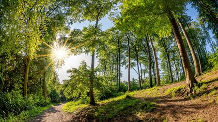 Path through a beautiful forest in spring with bright sun shining through the trees Archivio Fotografico
