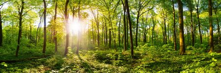 Spring forest with bright sun shining through the trees Stockfoto