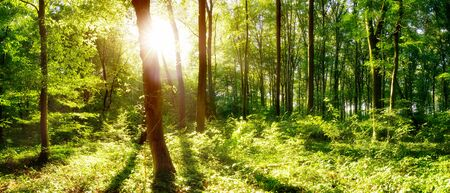 Spring forest with bright sun shining through the trees