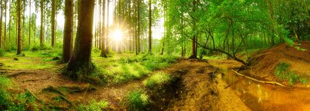 Forest panorama with brook and bright sun shining through the trees