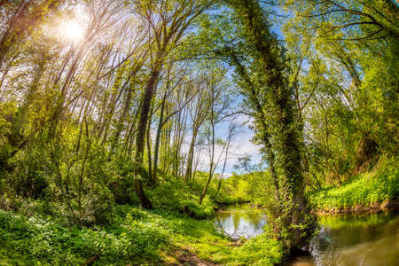 Forest in spring with young trees, stream and sun Standard-Bild