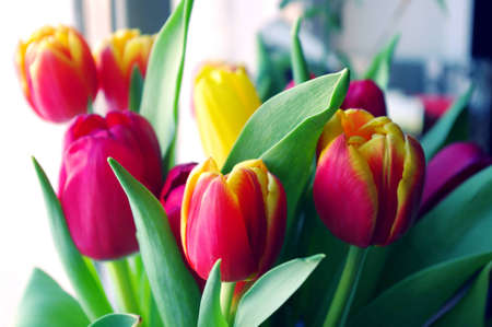 Bouquet of red yellow tulips