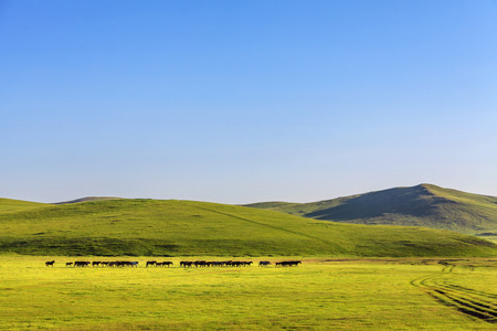 Horses in the prairie under the blue sky